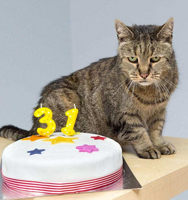 gato-31-anos-5