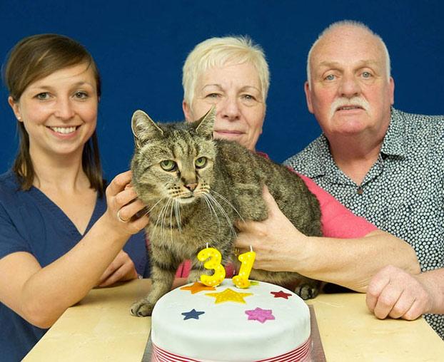 gato-31-anos-6