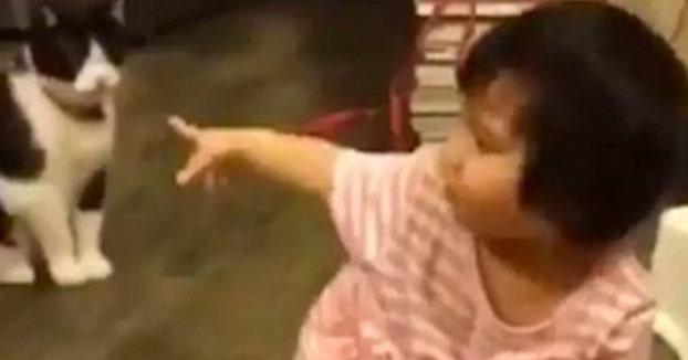 El vídeo del gato que le pone la zancadilla a una niña y está arrasando en las redes sociales