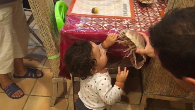 La primera vez que mi hijo ve un isópodo
