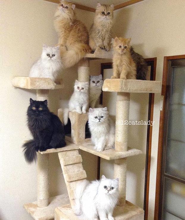 mujer-12-gatos-persas-10
