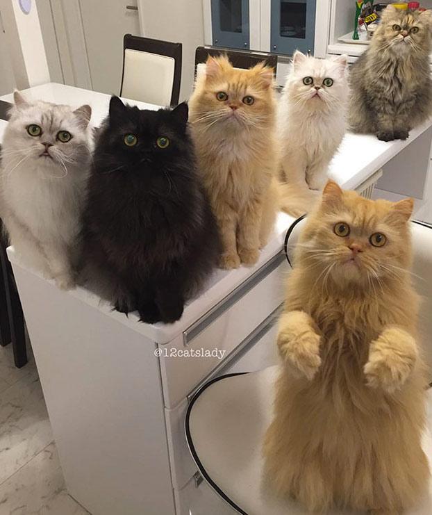 mujer-12-gatos-persas-11