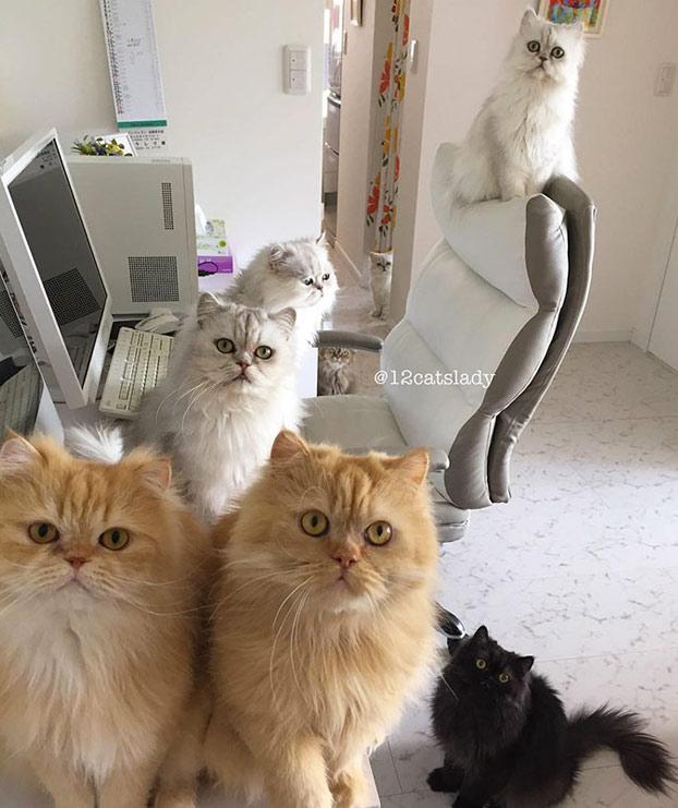 mujer-12-gatos-persas-13
