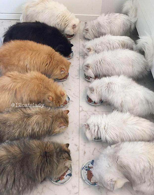 mujer-12-gatos-persas-4