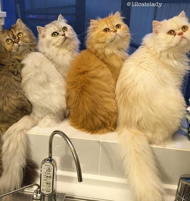 mujer-12-gatos-persas-6