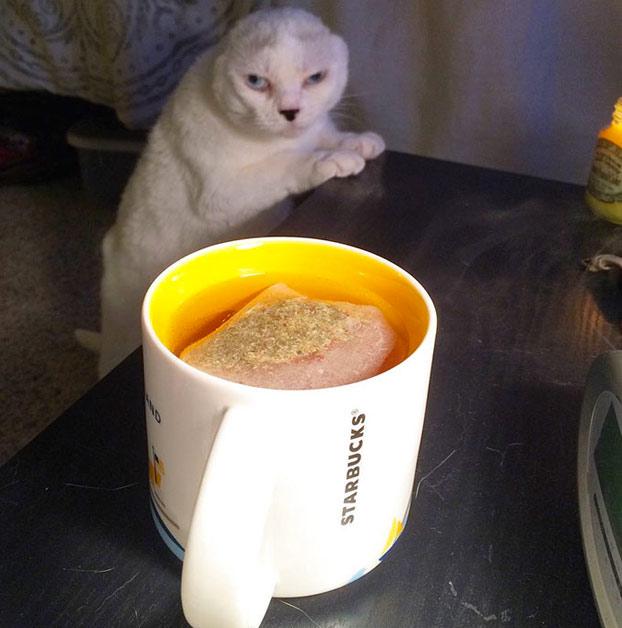 adopta-gato-sordo-8