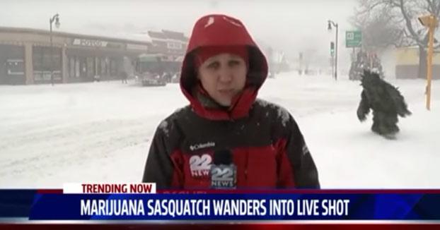 Esta reportera fue sorprendida por un hombre-marihuana en plena retransmisión en directo