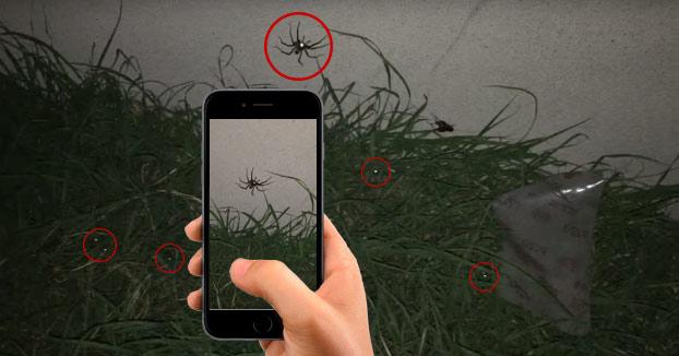 Cómo localizar todas las arañas de tu jardín con un smartphone