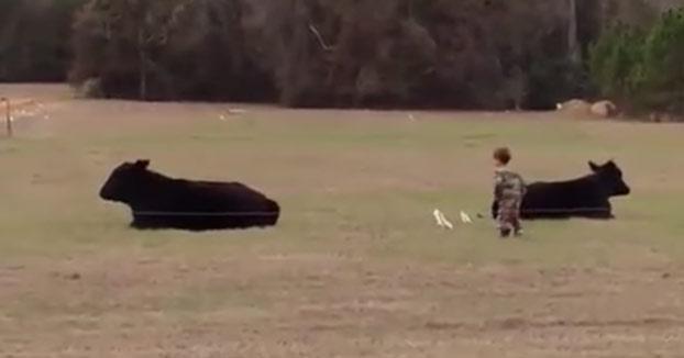 Padre del año: Le ofrece a su hijo pequeño 20 dólares si es capaz de subirse encima de una vaca