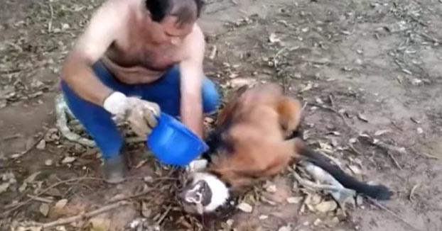 Este camionero salva a un lobo Guará deshidratado que buscó refugio debajo de su camión