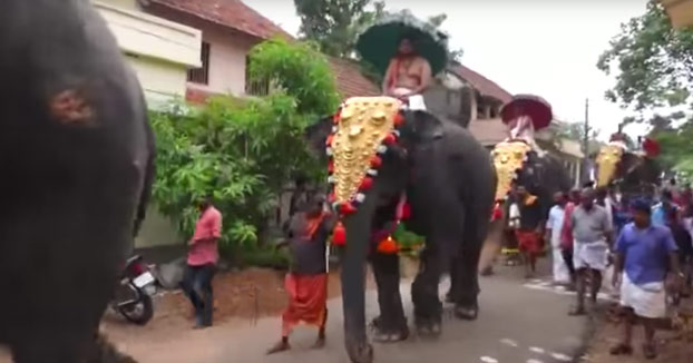 Nunca camines junto a un elefante