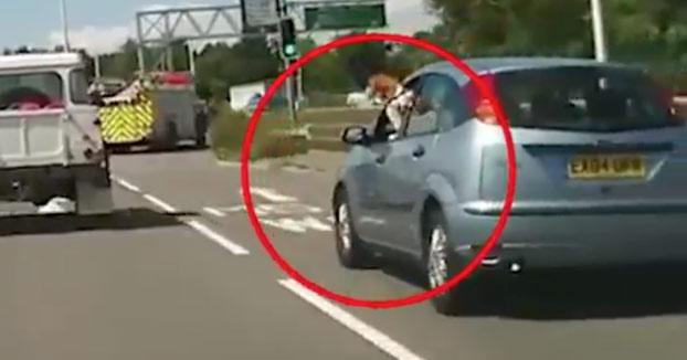 Por qué no debes dejar que tu perro saque la cabeza por la ventanilla del coche