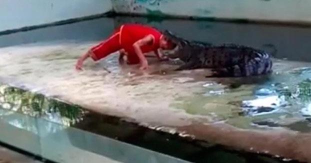 Un adiestrador coloca su cabeza en la boca de un cocodrilo y pasa lo que no tenía que pasar...