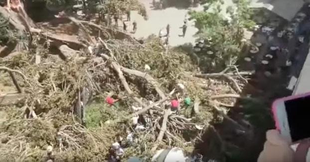 """El mejor vídeo del Ficus de Murcia es el de la Lourdes: """"¡Cállate, Lourdes!"""" """"¡Cállate tú, pijo!"""""""