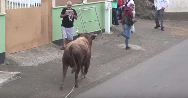 Grababa a un toro con su iPad sin preocuparse de nada hasta que el animal lo embistió brutalmente