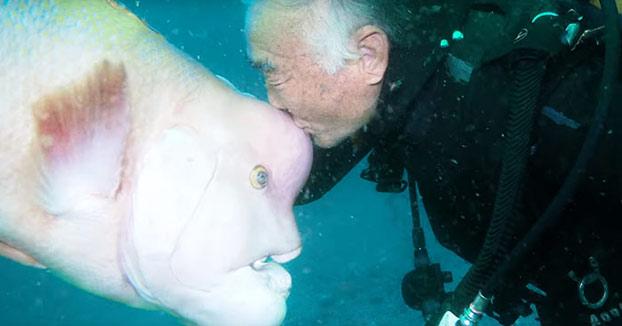 Este buceador japonés lleva 25 años visitando a su amigo pez