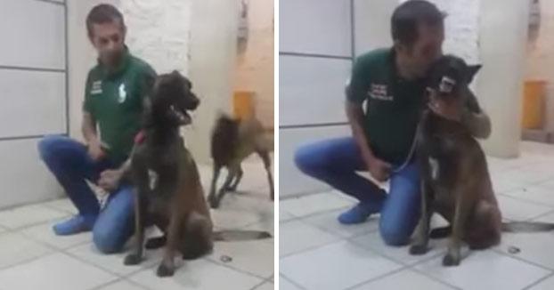 El entrenador le va a dar un beso a su Pastor belga malinois y este le ataca