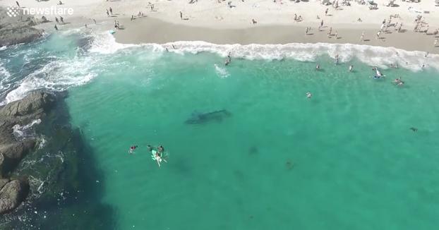 Una ballena perdida nada cerca de la orilla al lado de los bañistas y estos ni se inmutan