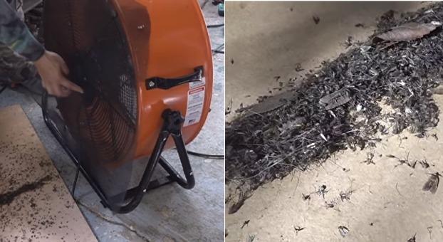 hombre mata miles de mosquitos con ventilador
