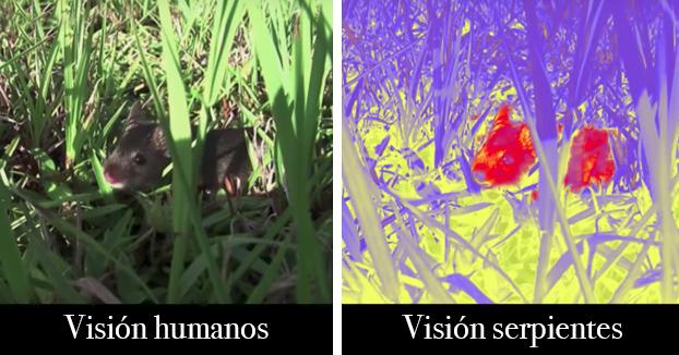 Así es como ven el mundo los animales
