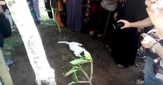 Este gatito no se quiere ir de la tumba de su dueño... incluso intenta cavar