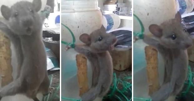 Atrapa a un ratón, lo ata a un bote y lo fustiga con un palo porque le robó la comida