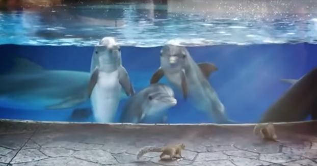 Estos delfines se quedan fascinados al ver a unas ardillas merodear por allí al lado