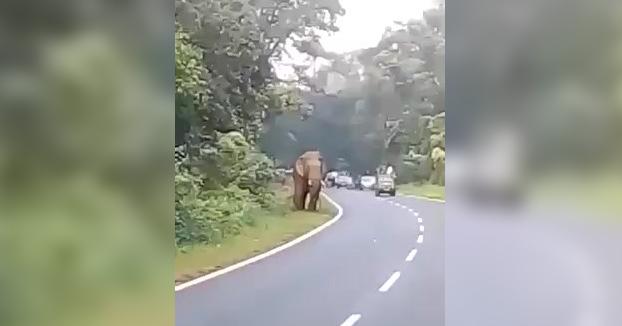 Un elefante mata a un hombre que se acercó al animal para hacerle una foto