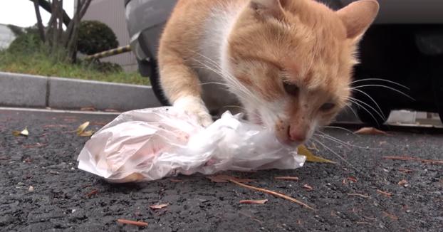 La historia de la gata que solo aceptaba comida envuelta en una bolsita de plástico