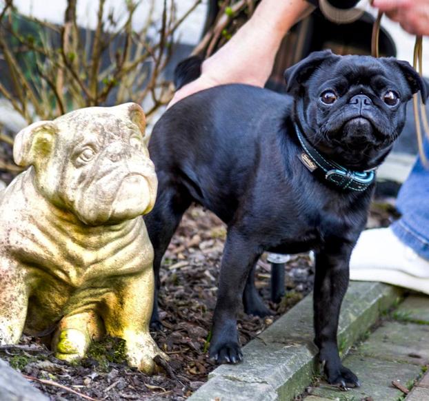Un ayuntamiento requisa el perro de una familia endeudada y lo vende por eBay