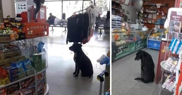 Graban a un perro pidiendo cajas de cartón para hacerse una cama en una estación de autobuses