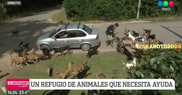 Reportero en apuros cuando hacía un directo desde un refugio de animales