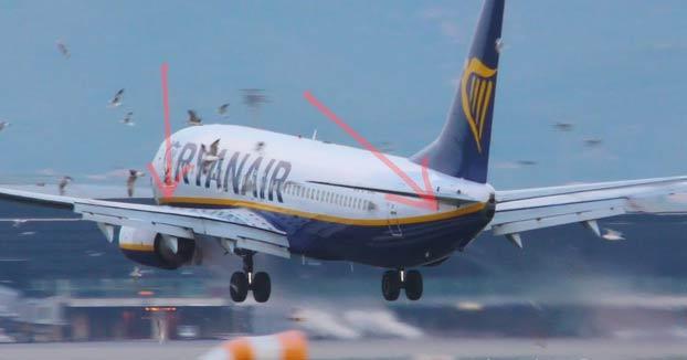 Un avión de Ryanair aterrizando en Barcelona se lleva varias gaviotas por delante