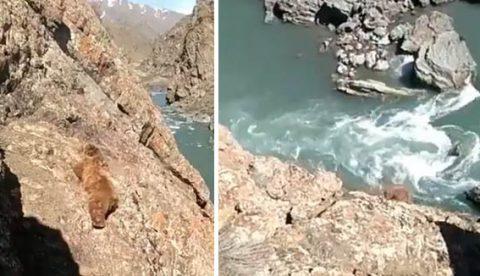 Un oso cae por un acantilado al intentar escapar de un grupo de personas que lo estaban apedreando