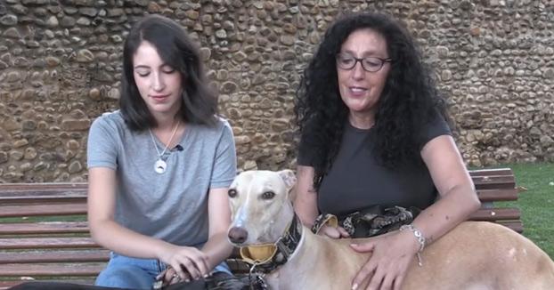En León hay casi el triple de perros que niños