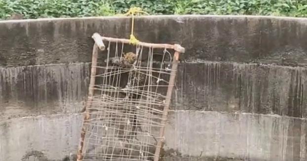 Salvan a un leopardo que cayó a un pozo colocándole una cama cuna a modo de escalera