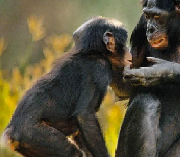 Fotografías compuestas con tantos píxeles como animales que quedan de cada especie